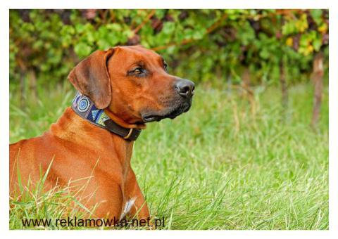 Bezpieczny odstraszacz psów kupisz na Obroza-Elektryczna