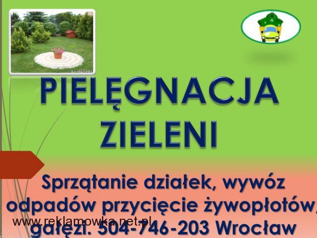 Posadzenie tui, tuje, sadzenie, tel 504-746-203, roślin,  tuji, cena  Przycinanie