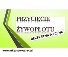 Wycięcie drzewa cena, tel. 504-746-203. ścięcie, wycinka  Wrocław.prześwietlenie drzew,cięcie gałęzi